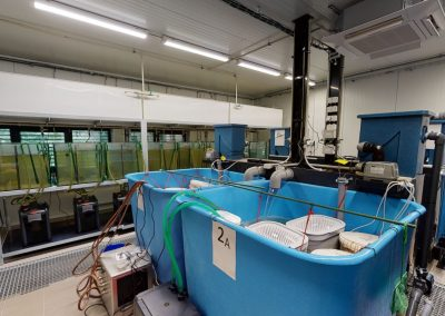 FROV JU – Laboratoř rybích chorob