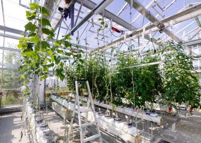 FROV JU – akvaponický skleník